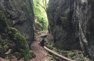 Durch die Wolfsschlucht des Naturpark Thal